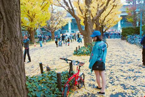 Đẹp mê say mùa lá vàng ở Nhật Bản - 12