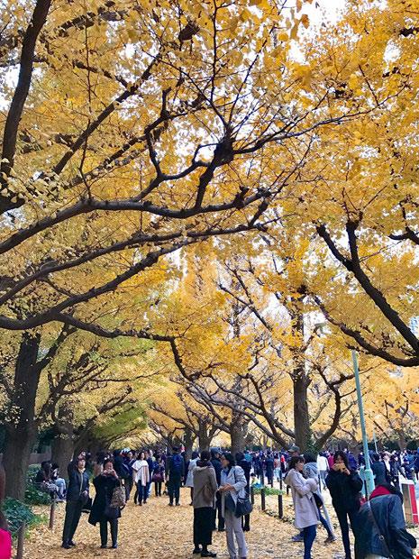 Đẹp mê say mùa lá vàng ở Nhật Bản - 3