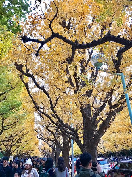 Đẹp mê say mùa lá vàng ở Nhật Bản - 6