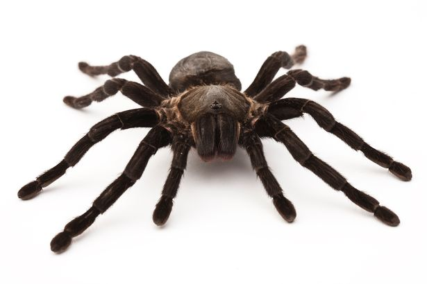 Hoảng hốt với nhện to như rùa chui ra từ bụi rậm - 1