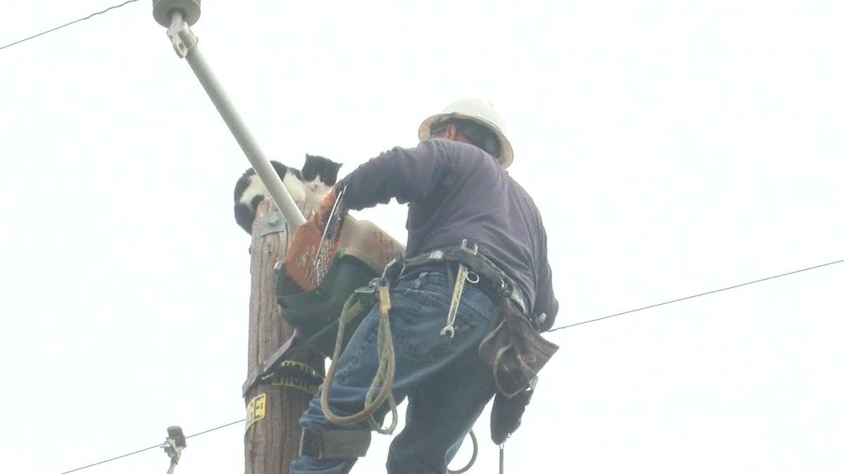 Cắt điện 250 nhà, giải cứu mèo kẹt trên cột điện suốt 9 ngày - 1