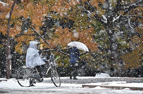 Ngắm tuyết rơi sớm tuyệt đẹp ở Nhật Bản - 8