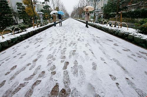 Ngắm tuyết rơi sớm tuyệt đẹp ở Nhật Bản - 6