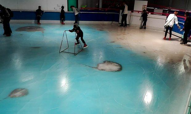 Công viên Nhật chôn 5.000 cá sống dưới băng gây phẫn nộ - 3