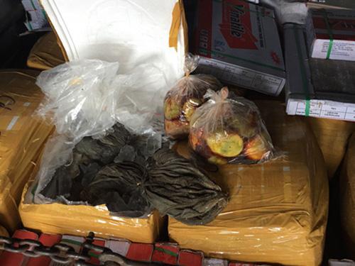 TT-Huế: Lại bắt giữ hơn 1,5 tấn nội tạng bốc mùi hôi thối - 1
