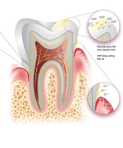 Tác hại không ngờ của việc chải răng không đúng cách - 3