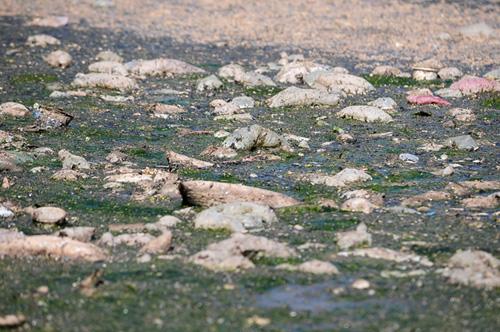 Phát hiện bãi thải ven sông Hồng ngập trắng bao cao su - 4