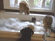 Tranh vui - Ảnh động: Đau đầu vì những chú mèo nghịch như quỷ sứ