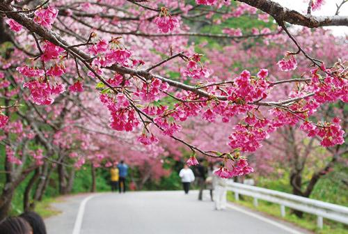 Say đắm vẻ đẹp bí ẩn – huyền bí của hòn đảo Okinawa Nhật Bản - 4