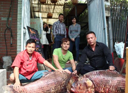 """Cặp cá """"khủng"""" về HN, gần 4 triệu đồng/kg vẫn đắt hàng - 1"""