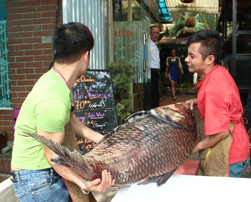 """Cặp cá """"khủng"""" về HN, gần 4 triệu đồng/kg vẫn đắt hàng - 3"""