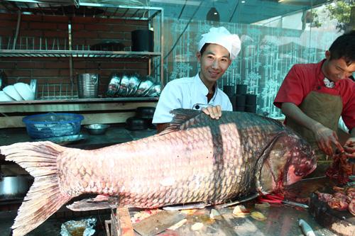 """Cặp cá """"khủng"""" về HN, gần 4 triệu đồng/kg vẫn đắt hàng - 4"""