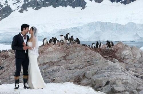 Cặp đôi đến Nam Cực làm đám cưới cùng chim cánh cụt - 2