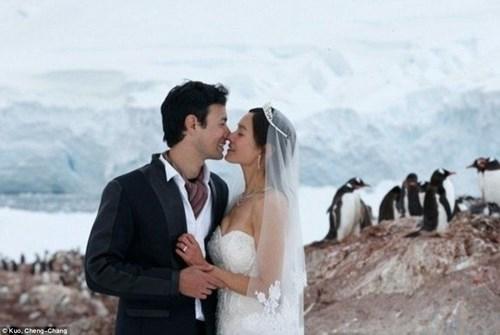 Cặp đôi đến Nam Cực làm đám cưới cùng chim cánh cụt - 3