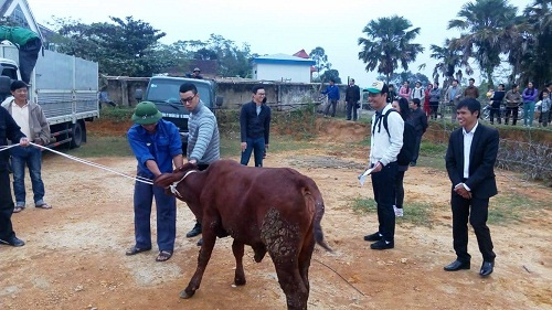 Phan Anh mang bò tặng người dân vùng lũ miền Trung - 1