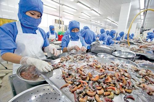 Cả năm xuất khẩu tôm dự kiến đạt 3,1 tỷ USD - 1