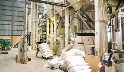 Vì sao xuất khẩu gạo giảm? - 2