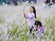 Mê mẩn ngắm vẻ đẹp bãi cỏ lau giữa lòng Hà Nội