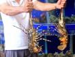 """Thích thú trước bể hải sản """"khủng"""" giữa nhà hàng Sepia"""