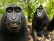 Loài khỉ kì lạ cứ thấy máy ảnh là cười toe, tạo dáng