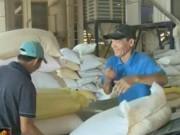 Nguyên nhân xuất khẩu gạo của Việt Nam giảm kỷ lục?