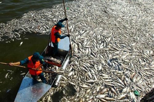Bốn nguyên nhân cá chết hàng loạt ở Hà Nội - 1