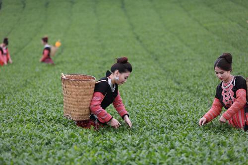 Vinatea: Đánh thức vẻ đẹp và quyền năng của trà Việt - 1