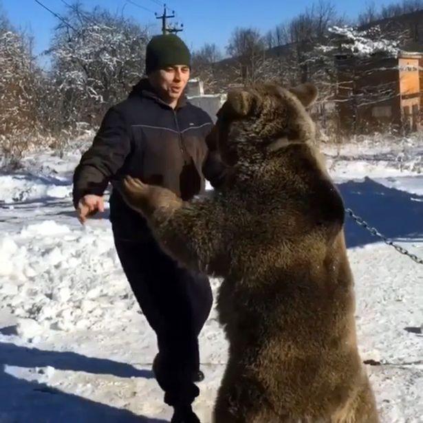 Cưỡi và chơi đùa với gấu khổng lồ như anh em trong nhà - 1