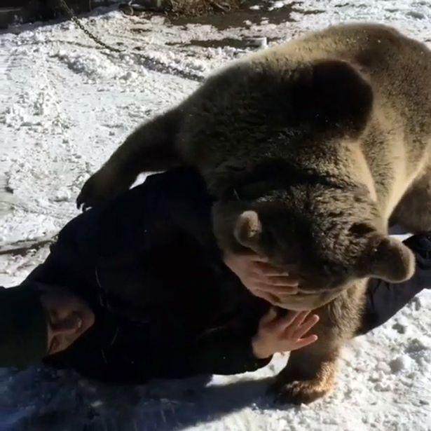 Cưỡi và chơi đùa với gấu khổng lồ như anh em trong nhà - 3