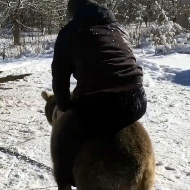 Cưỡi và chơi đùa với gấu khổng lồ như anh em trong nhà - 2