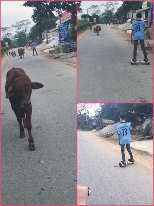 Đi xe điện chăn bò - bức ảnh hot trên mạng xã hội hôm nay - 1