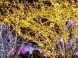 Giáng sinh lung linh sắc màu trên khắp thế giới