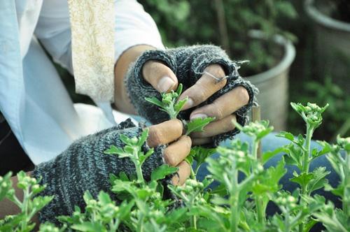 Hoa Tết không kết nụ, chủ vườn ở Sài Gòn khóc ròng - 7
