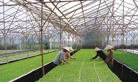 Nông nghiệp công nghệ cao: Làm gì để tạo gói 50-60 nghìn tỷ? - 1