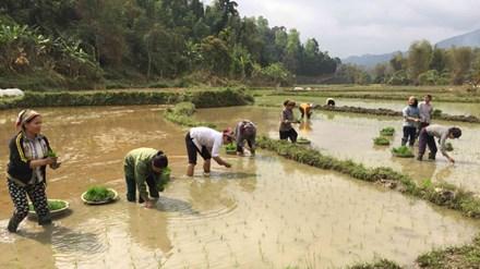 Nông dân lao đao vì áp lực giá phân bón - 1