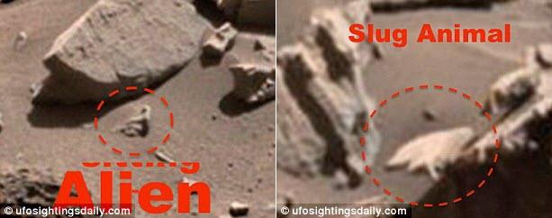 Phát hiện khỉ nhện trên sao Hỏa? - 2