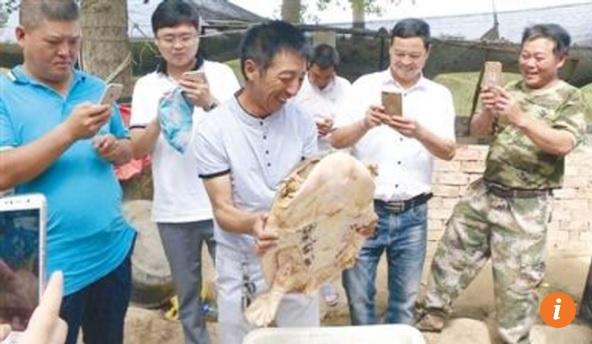 """TQ: Thả rùa khổng lồ cực hiếm về sông, nhận """"quà"""" bất ngờ - 1"""