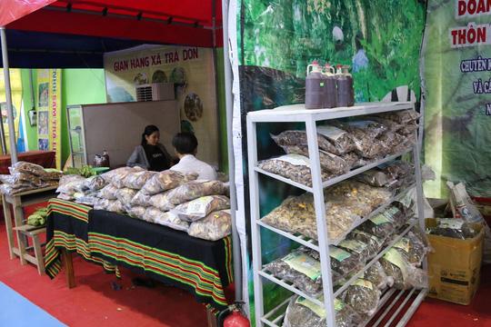 Sâm Ngọc Linh gần 100 triệu/kg vẫn đắt như tôm tươi - 5