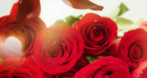 7 lợi ích sức khỏe và sắc đẹp từ hoa hồng - 4