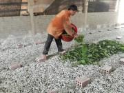 """Làm giàu ở nông thôn: Chỉ nuôi con """"ăn cơm đứng"""" có 10 triệu/tháng"""