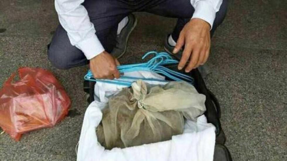 Phát hiện 50 rắn độc trong vali ở ga tàu Trung Quốc - 1