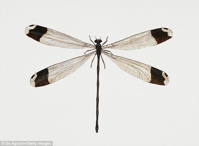 Những xứ sở của loài côn trùng khổng lồ - 13