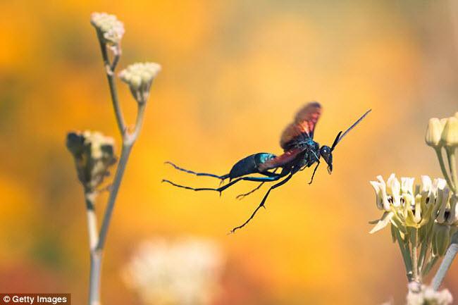 Những xứ sở của loài côn trùng khổng lồ - 12