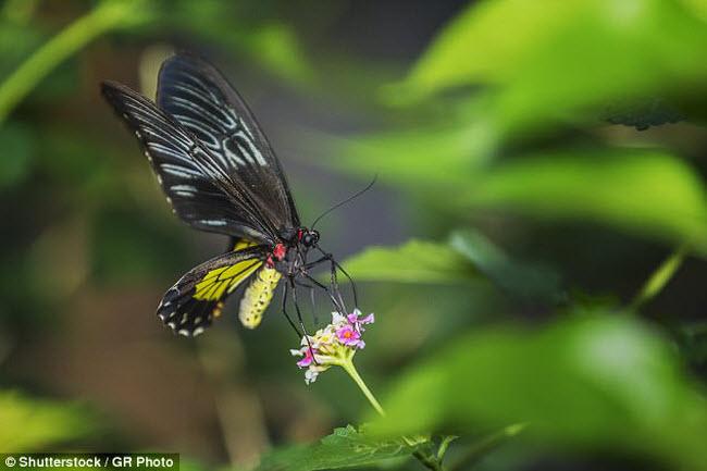 Những xứ sở của loài côn trùng khổng lồ - 6