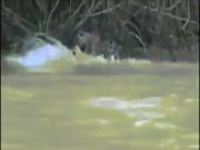 Thế giới - Cá sấu cả gan tấn công báo đốm, nhận kết cục cay đắng