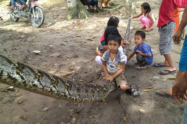 Indonesia: Người đàn ông tử chiến với trăn khổng lồ dài 7m - 2