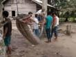 Indonesia: Người đàn ông tử chiến với trăn khổng lồ dài 7m