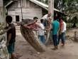 Vì sao trăn khổng lồ liên tiếp tấn công người ở Indonesia?