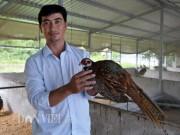 """""""Soái ca"""" miệt vườn nuôi chim đặc sản, thu nửa tỷ/năm"""