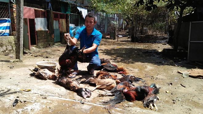 TP.HCM: Rò rỉ khí độc, 4 người nhập viện, vật nuôi chết la liệt - 6